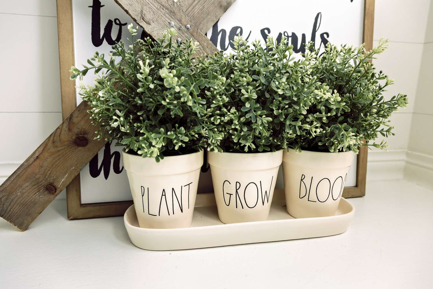 Indoor Plants Made for a Black Thumb | Easy Houseplants | Grace In ...