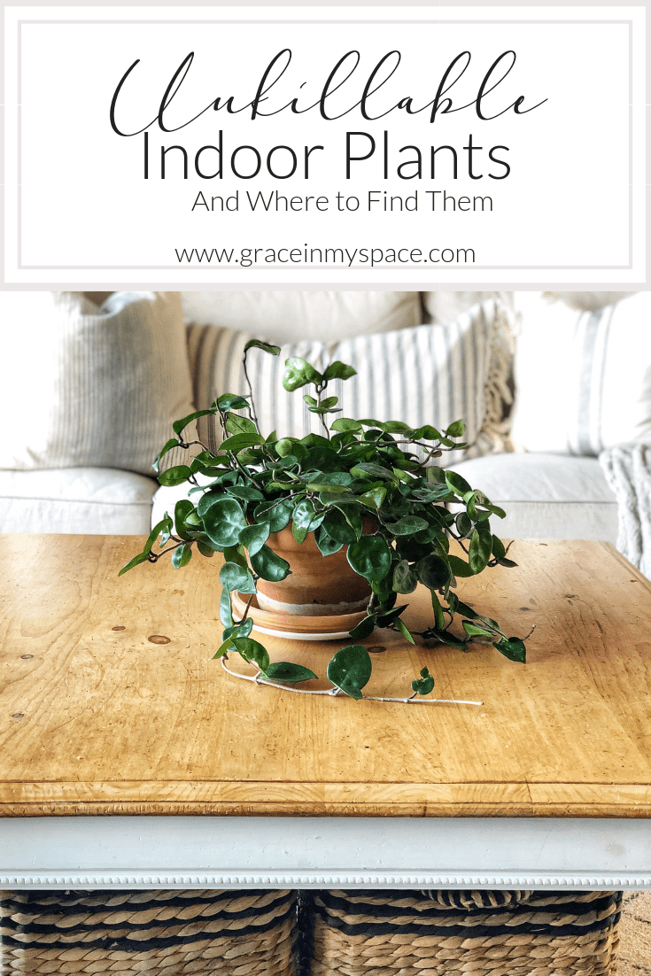 Do you struggle to keep your indoor plants alive? I've got 6 indoor plants made for those of us with a black thumb. Let's talk about some unkillable plants. #fromhousetohaven #indoorplants #easycareplants