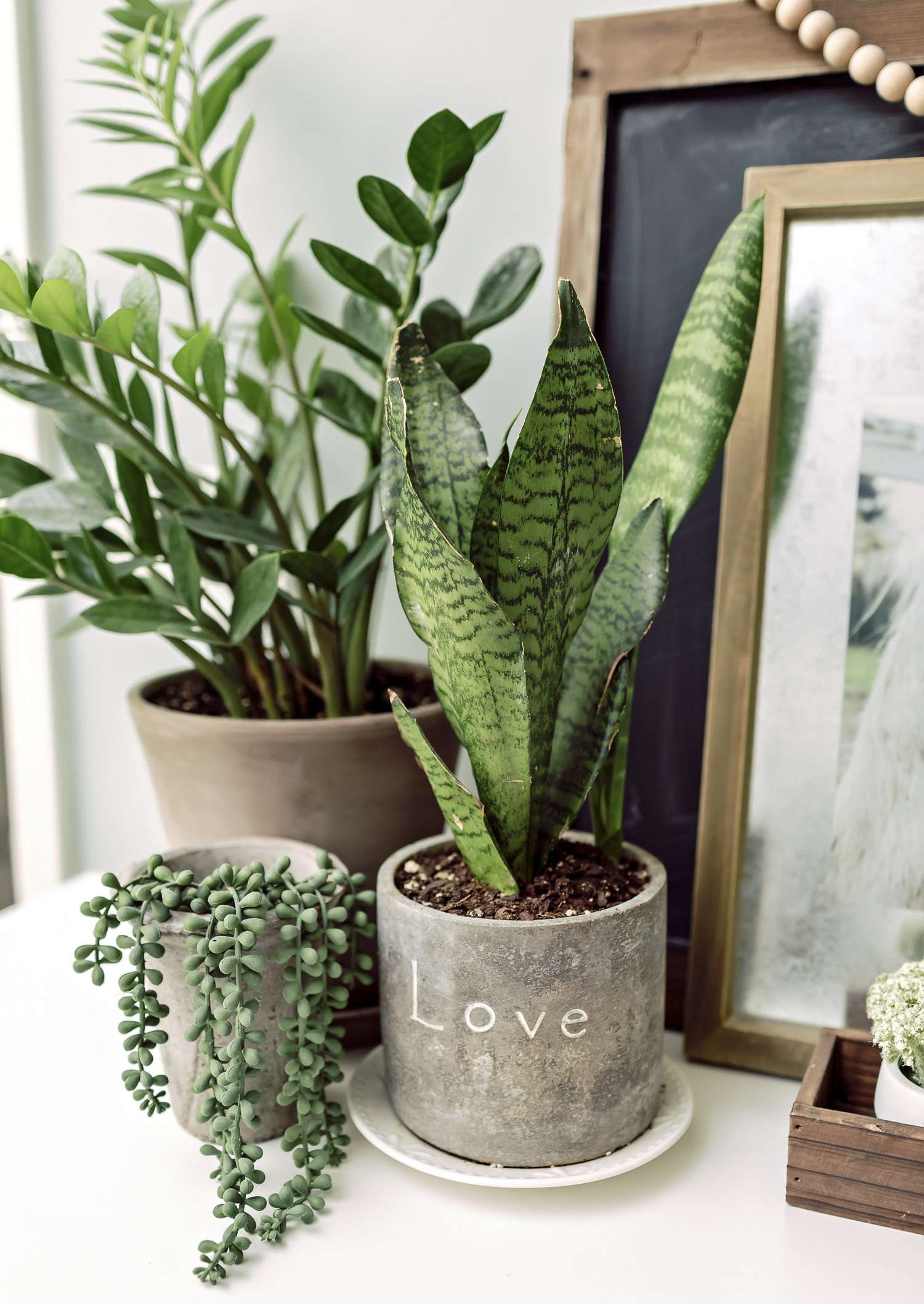 Beautiful easy indoor plants images decoration design for Best easy indoor plants