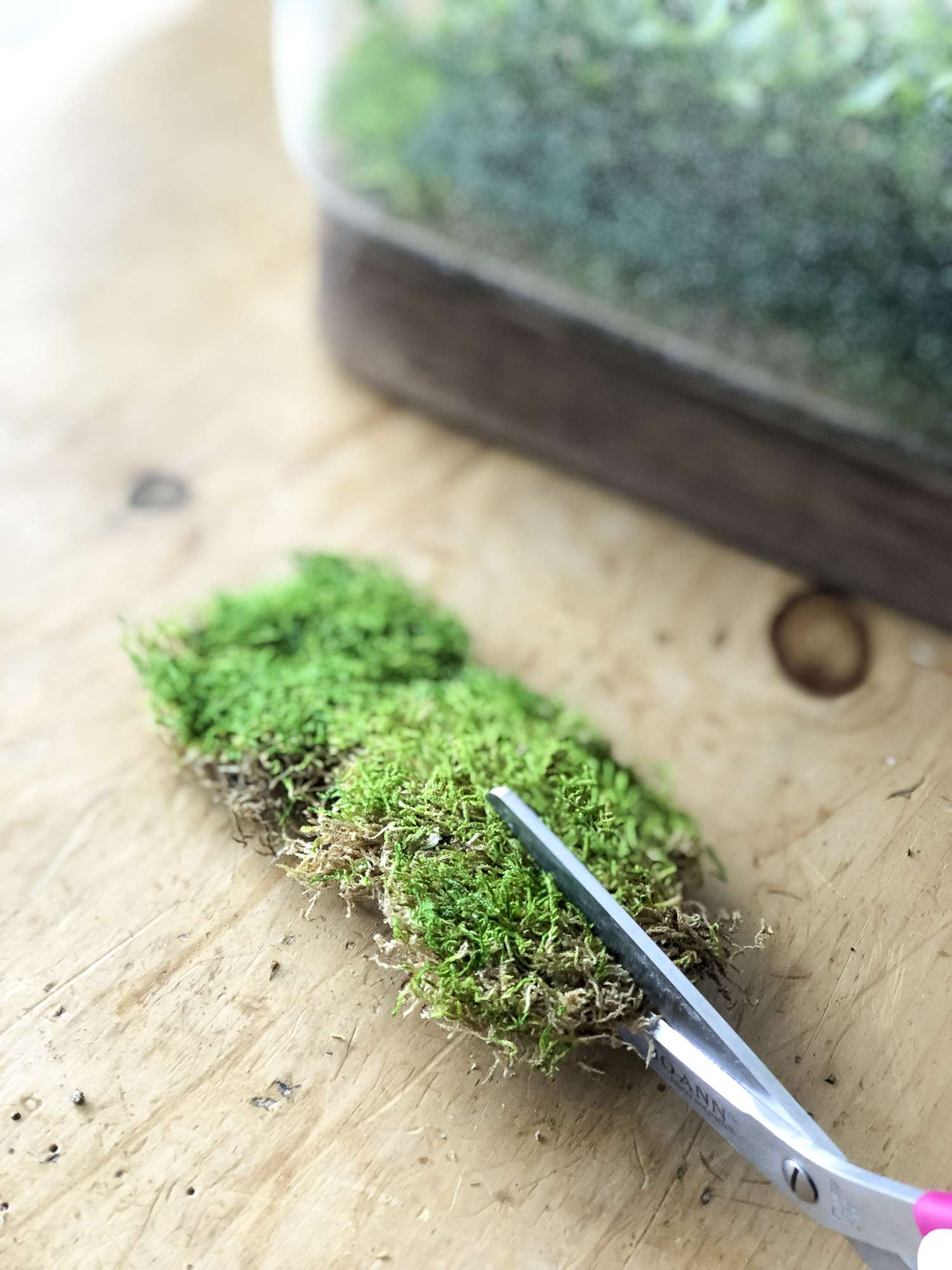 Do you love the look of terrariums? Try out this simple DIY faux terrarium! Brighten your home in less than 10 minutes with this easy tutorial. #fromhousetohaven #diyterrarium #fauxterrarium #plants