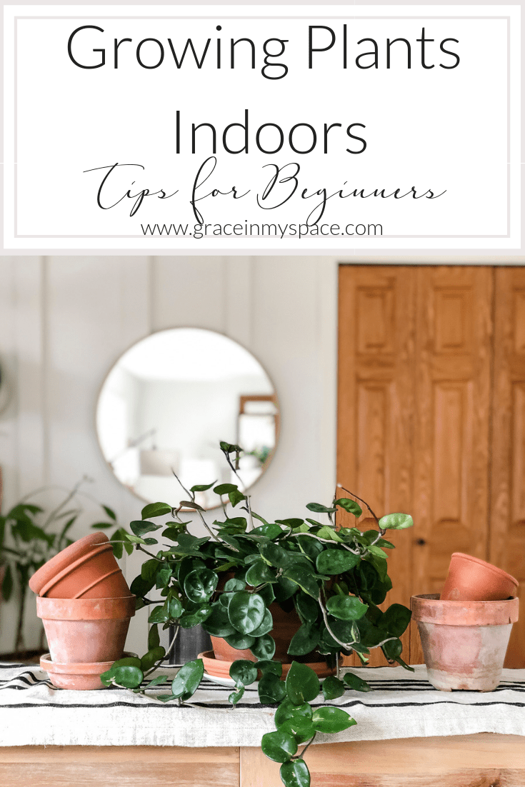 Do you want to be a plant lady but don't know where to start? Here are some of the easiest plants to care for and tips for growing plants indoors! #plantlady #plantcare #fromhousetohaven