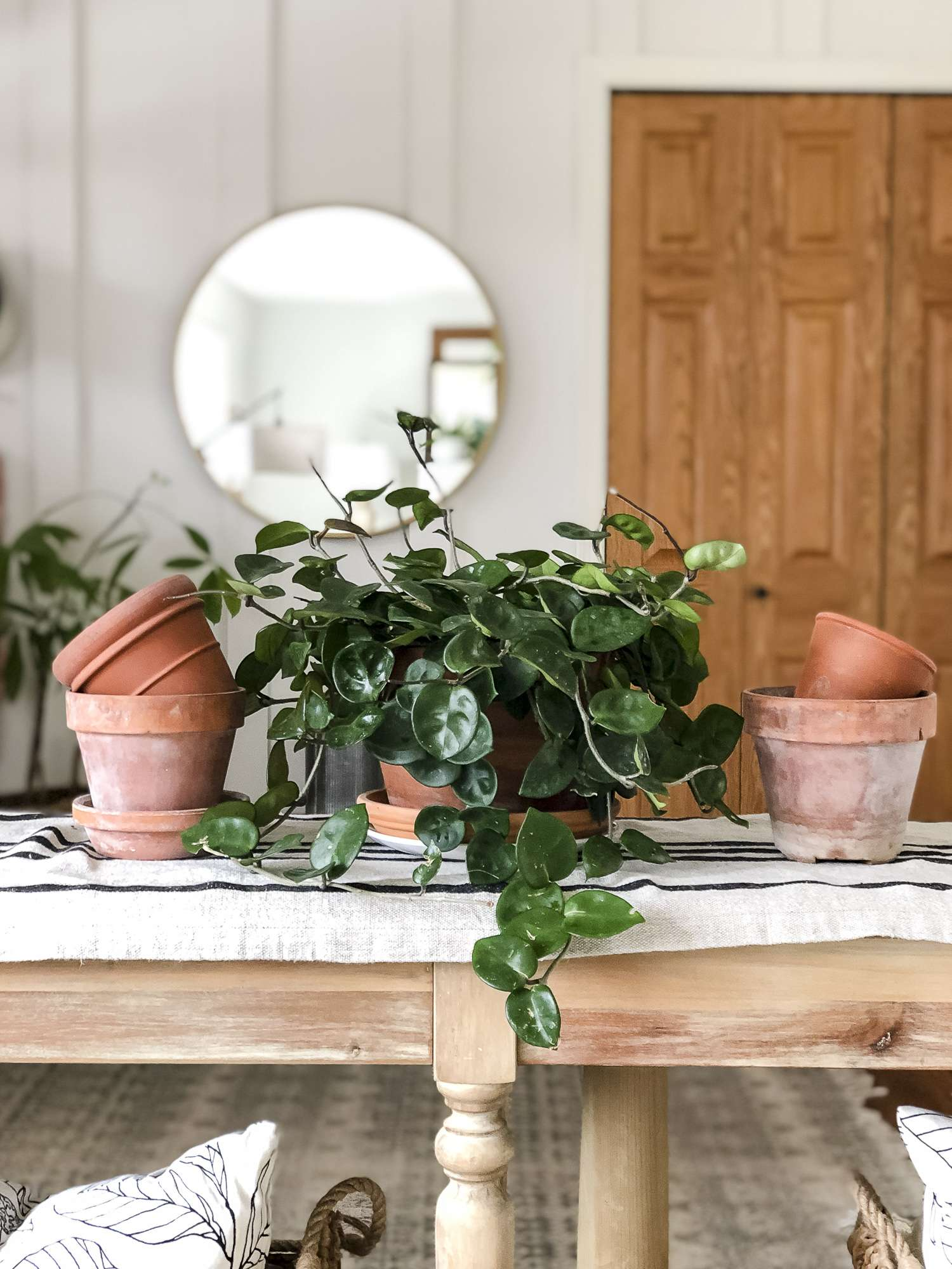 Do you want to be a plant lady but don't know where to start? Here are some of the easiest plants to care for and tips for growing plants indoors! #fromhousetohaven #plantcare #indoorplants