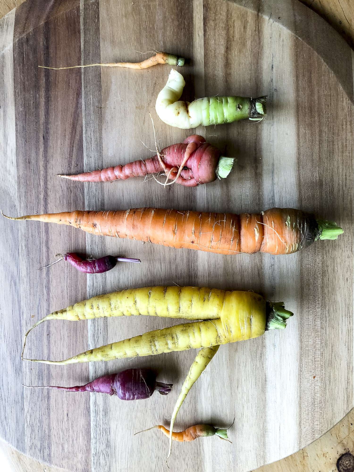 Do you want to grow a vegetable garden? Today I'm sharing my best tips for vegetable gardening for beginners. Avoid these 5 mistakes for a glorious garden. #fromhousetohaven #gardeningtips #beginnergarden #vegetablegarden