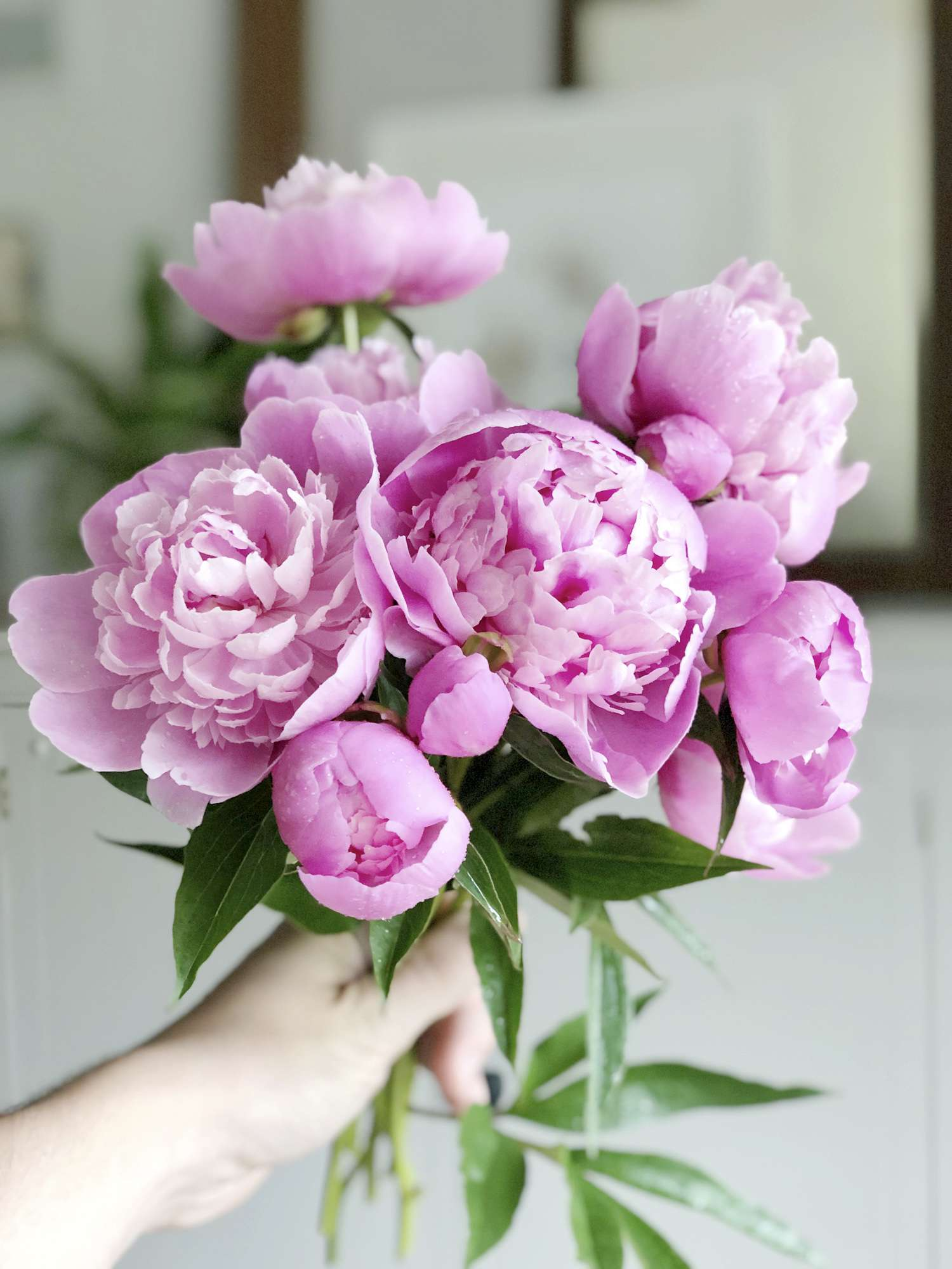 The peony flower is an absolutely stunning addition to your cutting garden. Here are three tips you may not know about peonies and peony care. #fromhousetohaven #peonies #peonycare #growingpeonies