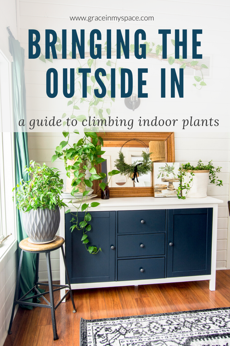 A guide to climbing indoor plants.