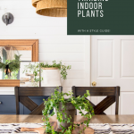 Trailing indoor plant style guide.