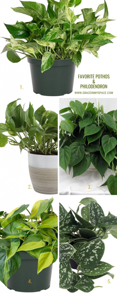 Favorite pothos and philodendron.