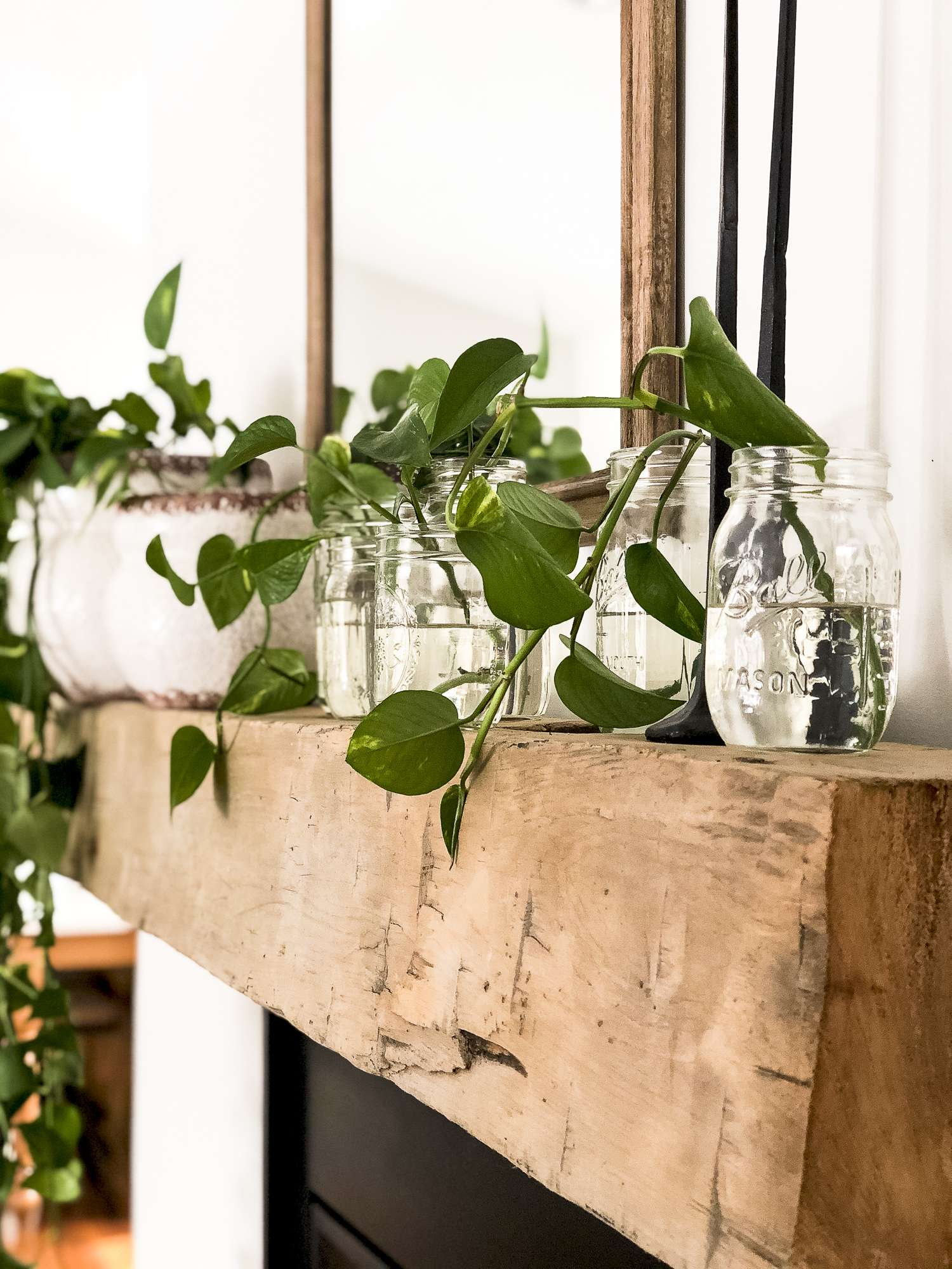 Styling spring mantel decor with plants is an easy task! Learn how easy propagating pothos is, while letting this indoor plant serve as decor too!