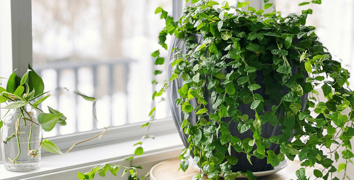 How to Use Plants as Decor to Decorate for Spring