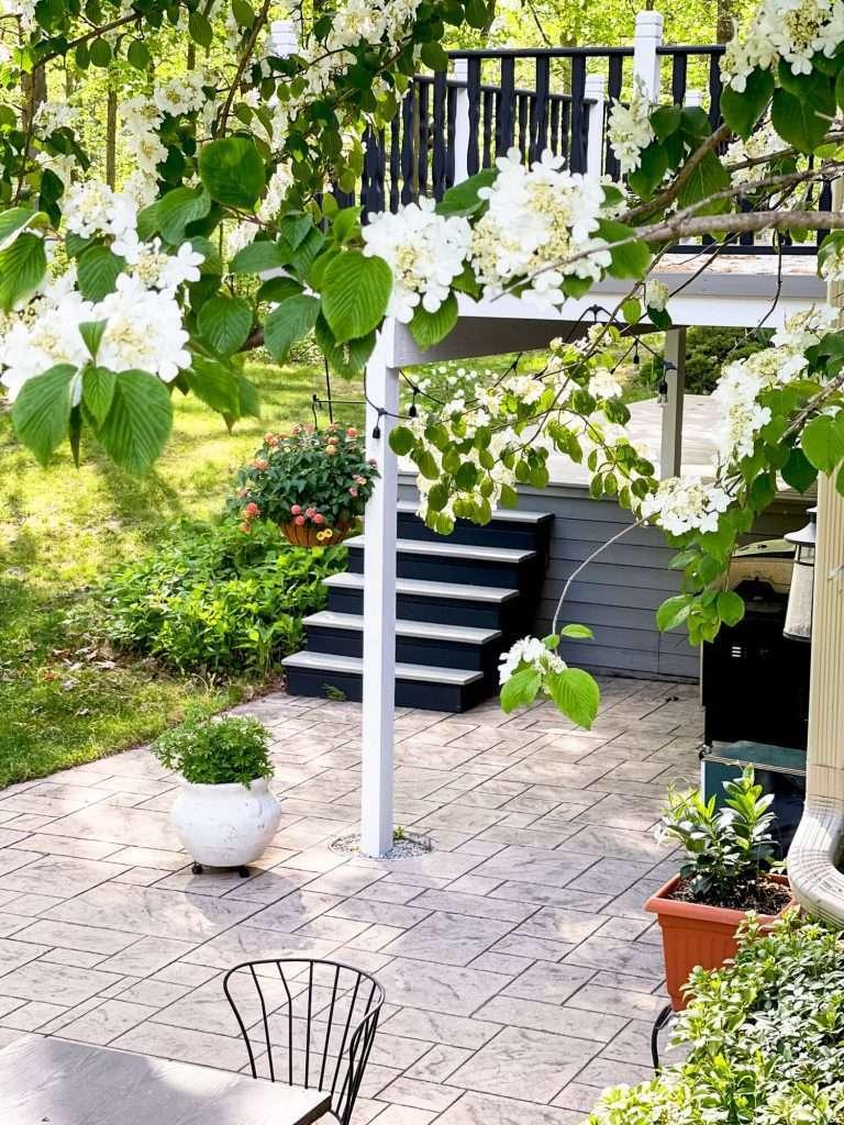 Backyard patio area with flowers