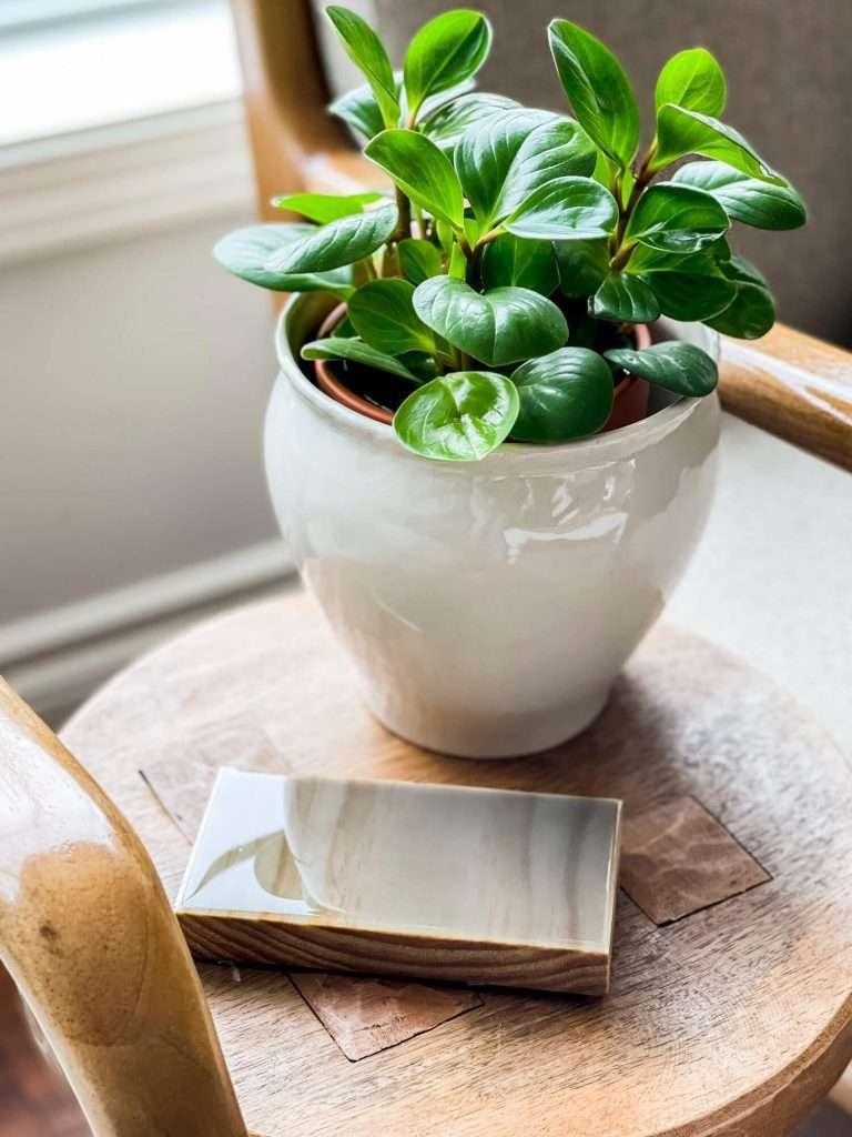 DIY epoxy coaster with a plant.