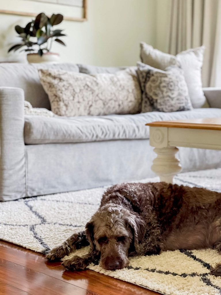 Labradoodle relaxing on a living room rug.