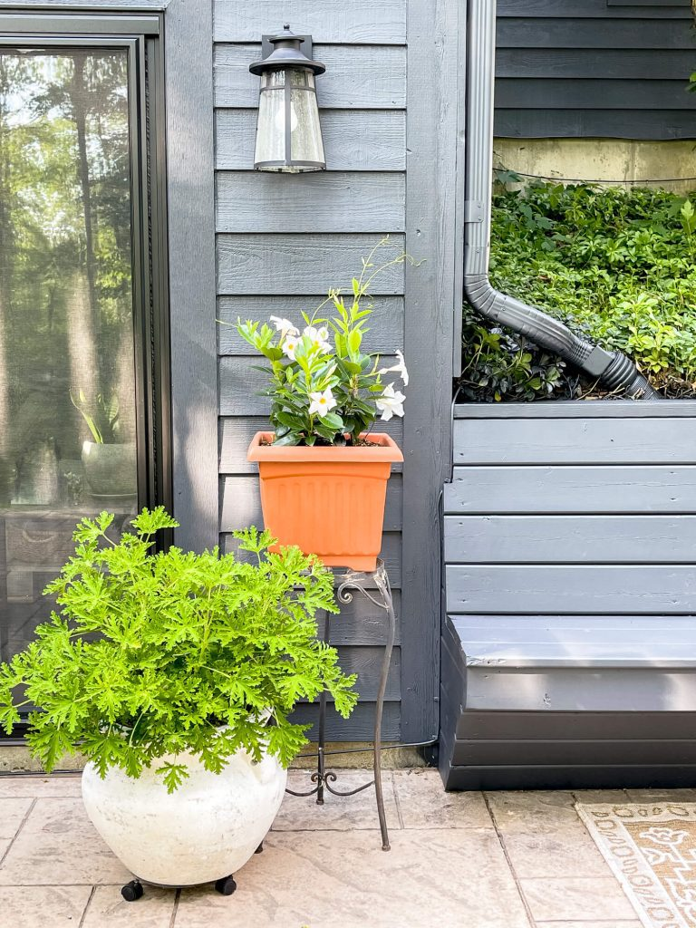 Potted outdoor plants