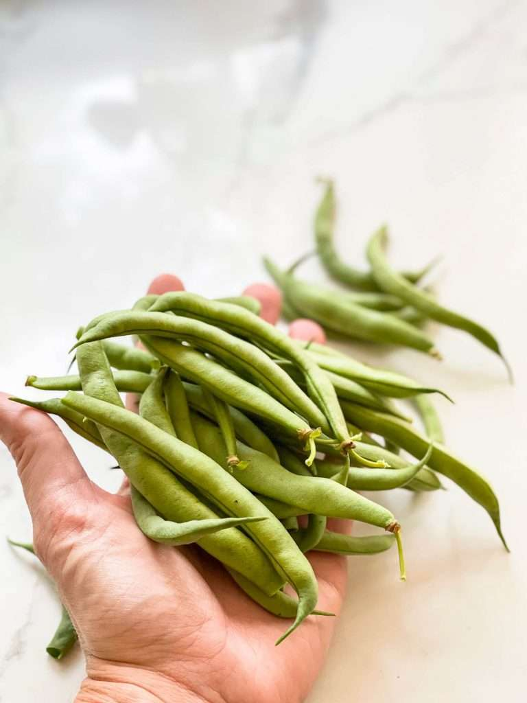 How to start a garden from scratch with green beans