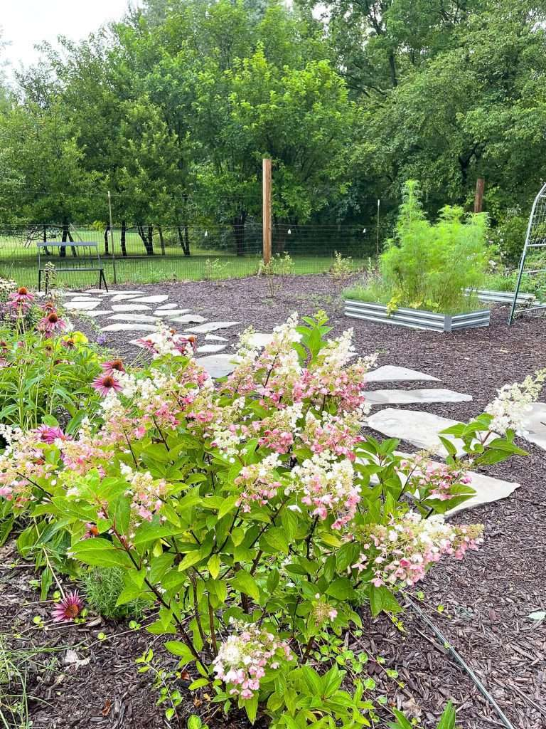 Raised beds for how to start a garden from scratch