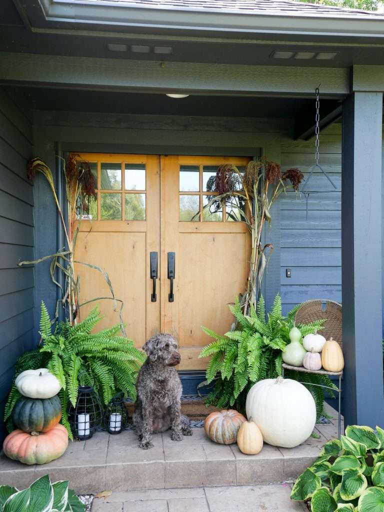 Front porch decorated for fall with a dog.